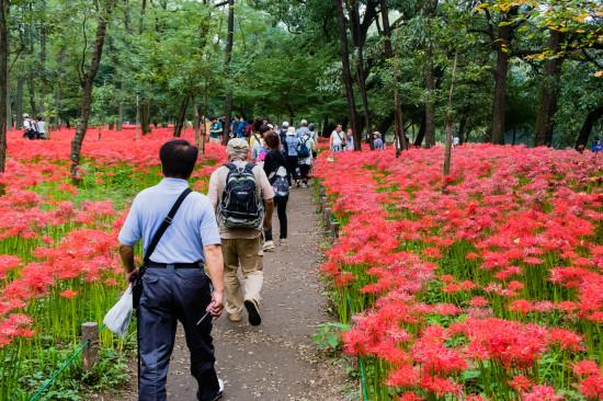 公園内にはきちんと通路が整備されていて歩きやすい
