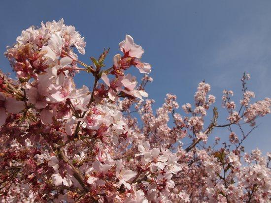 例:お花見の写真