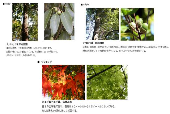 植樹する木々