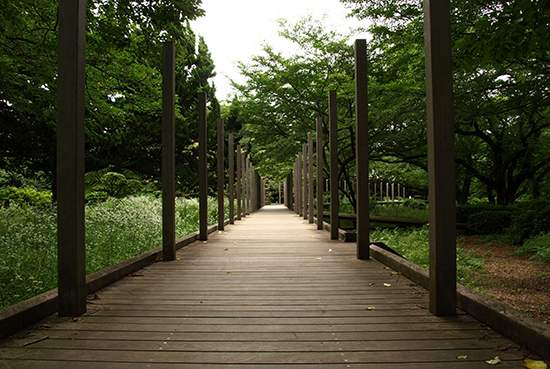 緑の風が心地よい昭和記念公園