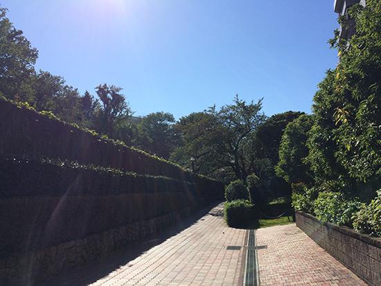 自然が感じられる「武蔵野の道」