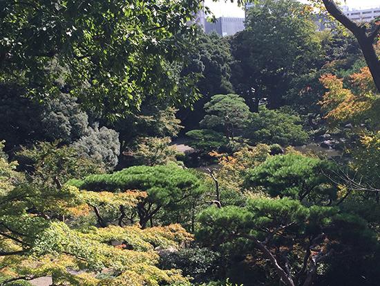 こちらも見事な日本庭園
