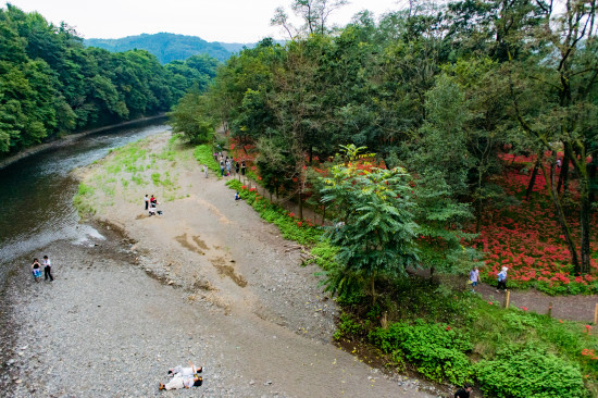巾着田と高麗川。河原で休憩することもでき、デートにもうってつけ!