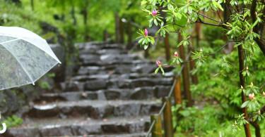梅雨だけどドライブを楽しもう!雨の日のおすすめスポット