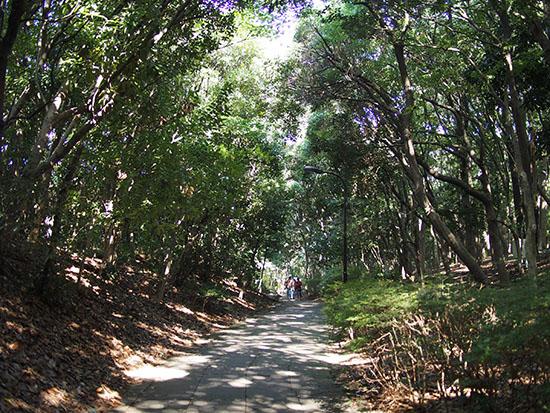 緑のトンネルのような遊歩道