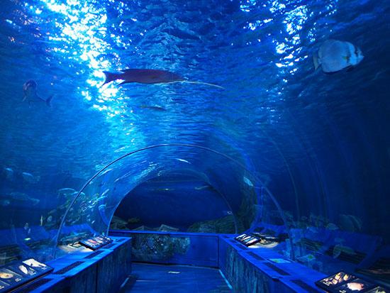 海底にいる気分を体験できるトンネル水槽