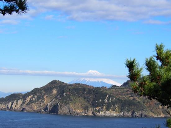 展望台からは、松の梢の向こうに富士山が見えます