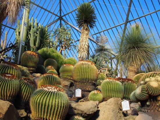 巨大なサボテンに圧倒されるメキシコ館の温室
