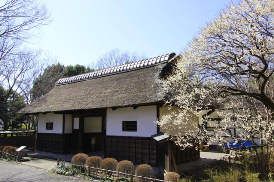 古民家と梅が風情を誘う郷土の森博物