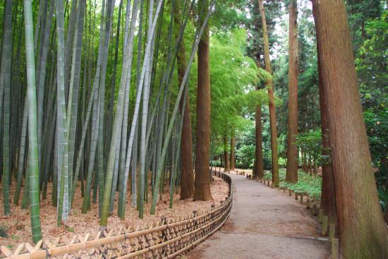 偕楽園の孟宗竹林