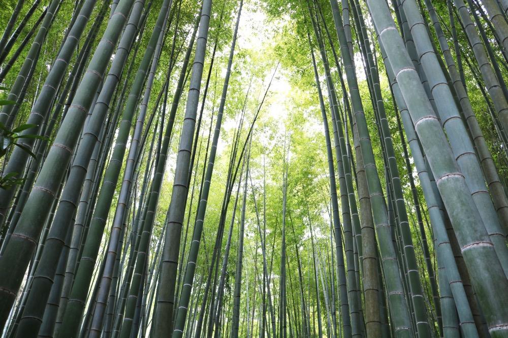 圧倒的な迫力の竹林! 静かな空間でつい時間を忘れて無心に