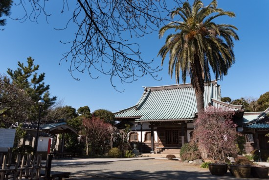 源頼朝の3つの御所の1つ「桜の御所」として知られる