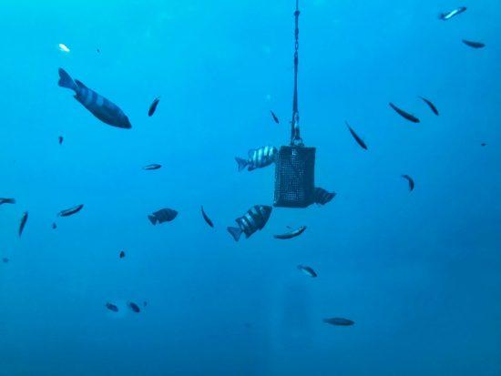 エサ箱に群がる魚たち。この日はかなり鮮明に魚の姿が見えました