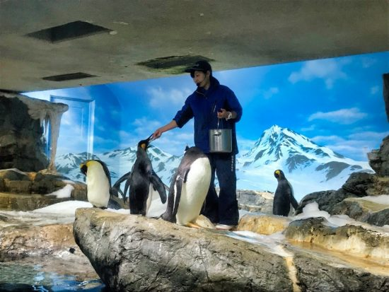 ペンギンのエサやりタイム