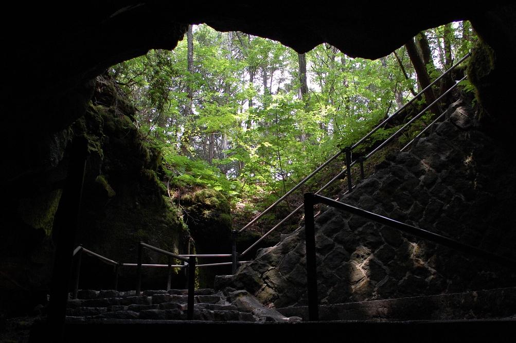 洞窟内から仰ぎ見る青木ヶ原樹海は、どこか神秘的
