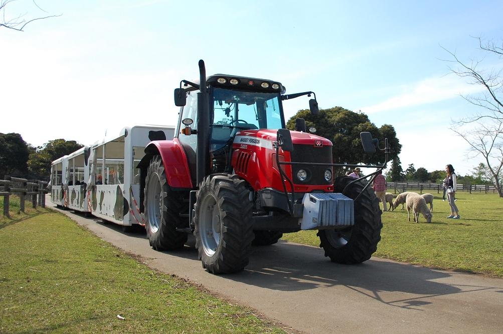 3両もある牛柄の客車を引っ張るのは巨大なトラクター。思いの外、静かなことに驚いた