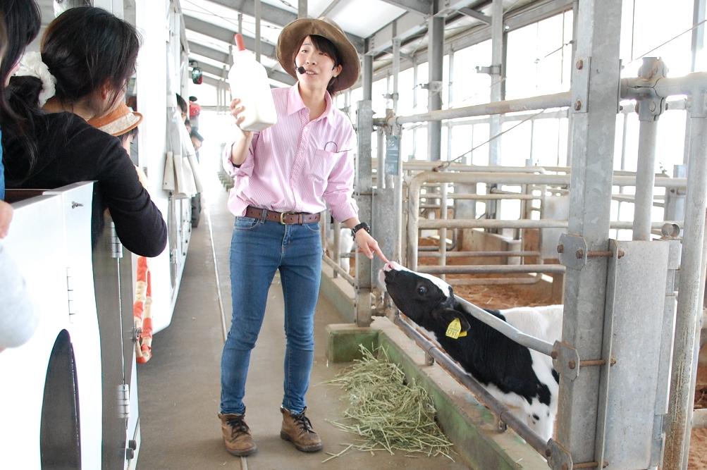 子牛に与えるミルクの原料は何か? 答えはガイドが教えてくれる