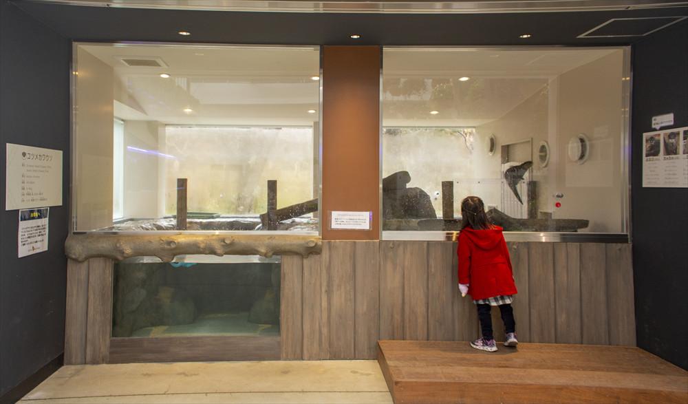 コツメカワウソは子どもにも大人気。水の中にある洞窟を抜け、穴から顔を出すかわいい姿にくぎ付け