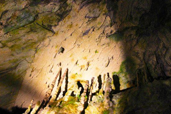 床から伸びるタケノコのような石筍
