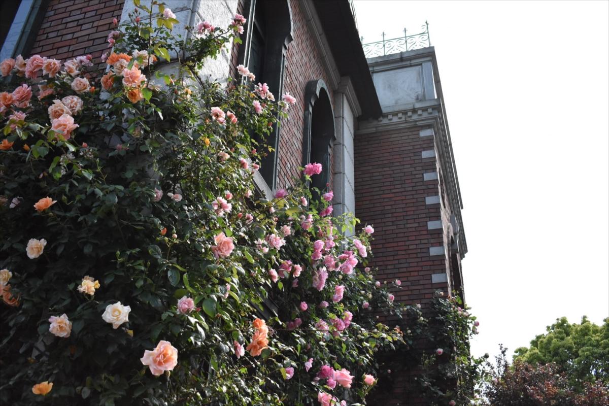 岩崎ミュージアムのバラも満開