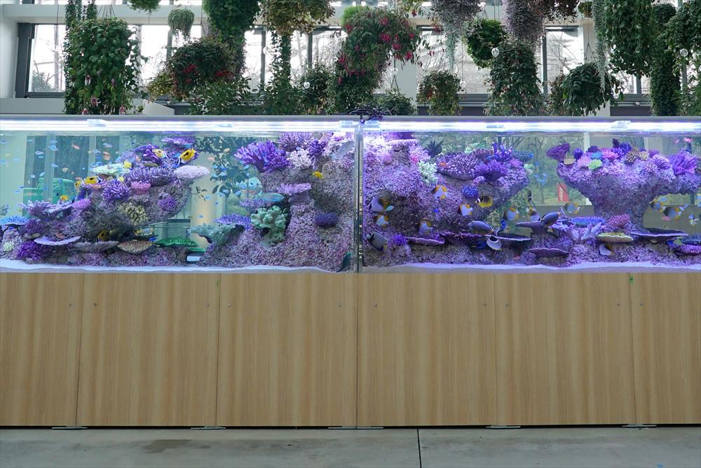 沖縄の海を演出した水槽。優美なアクアリウムに思わず立ち止まってしまう