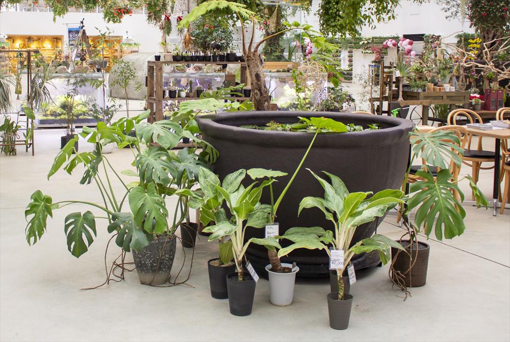館内中央にある「Shop charm」で植物の購入もできる