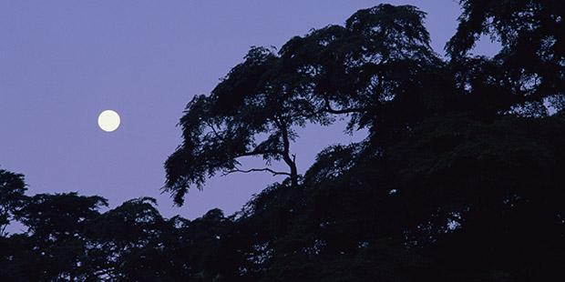 夜間パックで中秋の名月を楽しもう