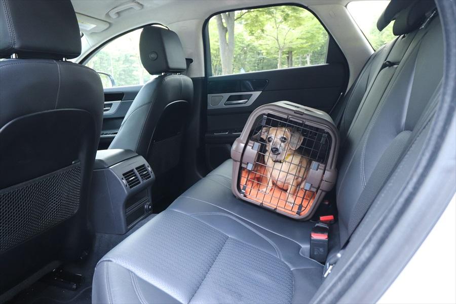 助手席や後席にペットを乗せるときは必ずケージに入れる