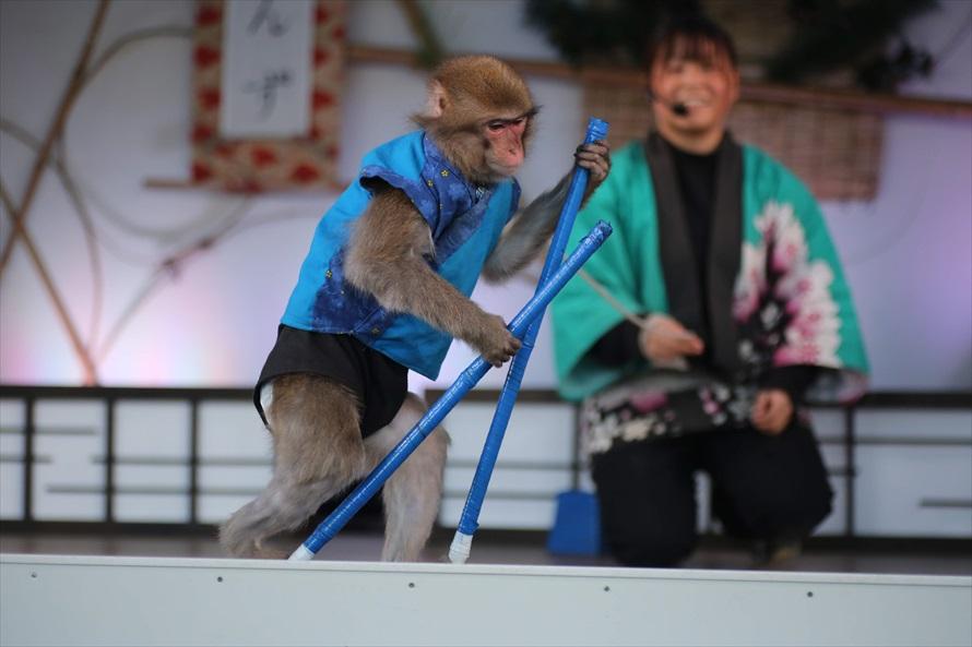 竹馬を乗りこなすお猿の曲芸にお客さんの歓声が上がる