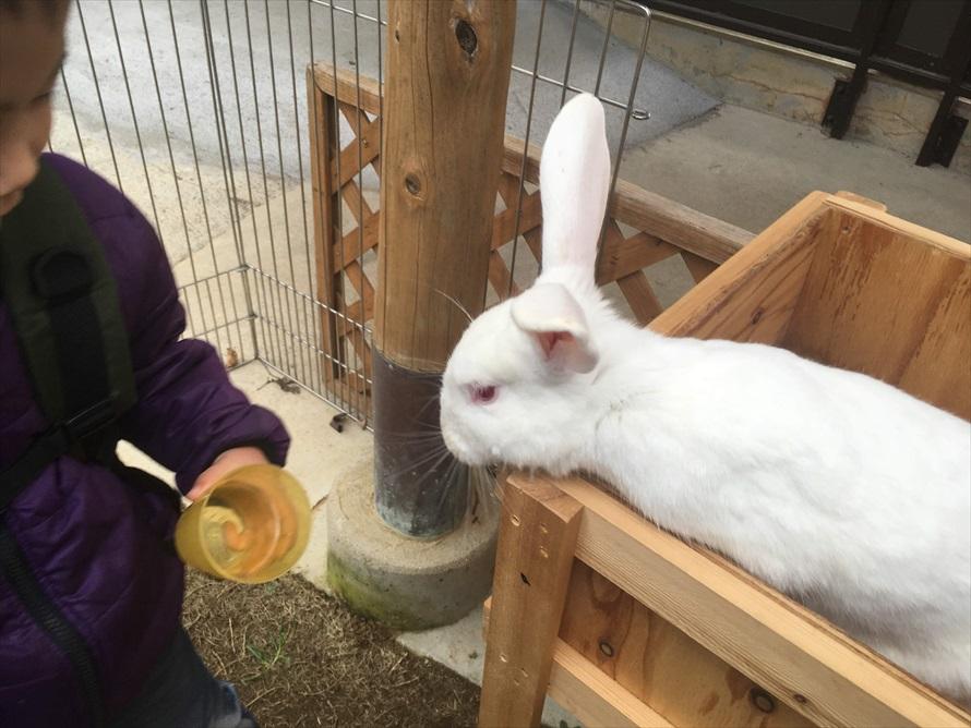 ウサギやモルモットにエサ(コップ1杯200円)をあげることができる