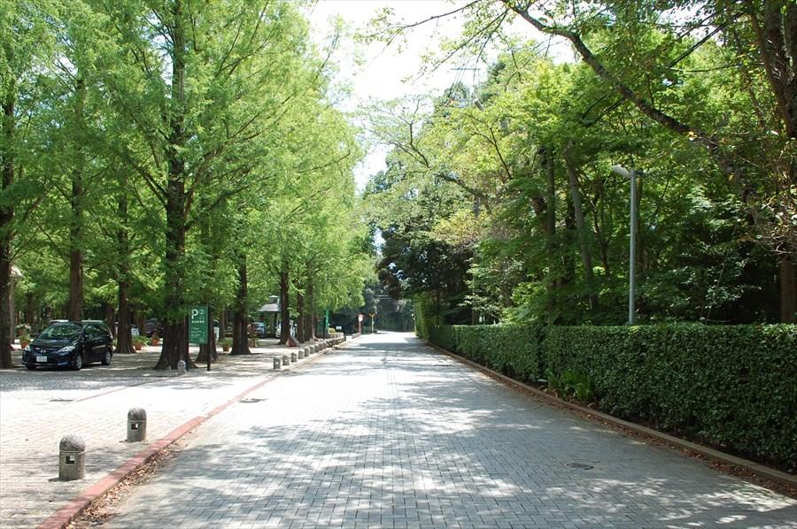 「リソルの森」内を通る道路は駐停車禁止。施設間を移動する利用客も多いので、徐行して走行すること