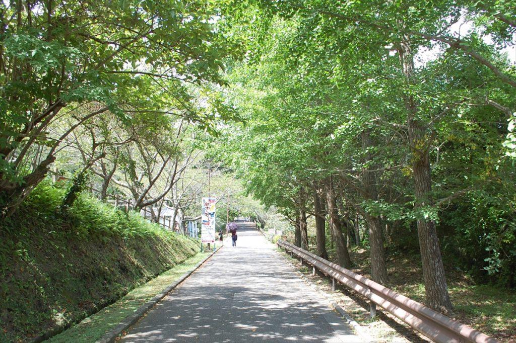 公園の入り口から館山城まで約10分。体力に応じてルートを選ぶのがおすすめ