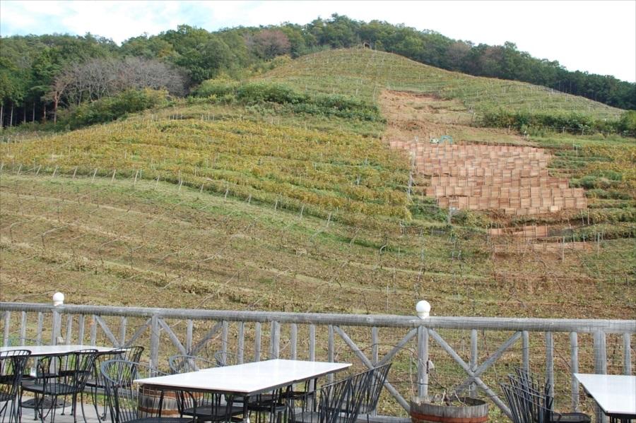 テラス席では、丘陵に広がる葡萄畑を眺めながら食事ができる。整地中の箇所は、台風の被害によるもの