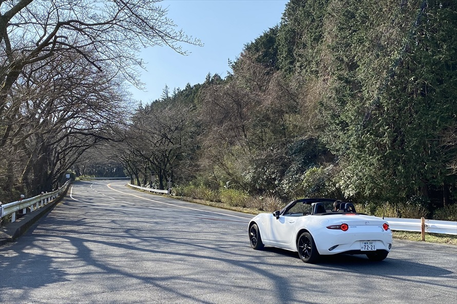 「御所の入駐車場」付近には約1,000本の桜の木があり、春には桜のアーチができる。また開花から見頃を終えるまで、夜間はライトアップも行われる