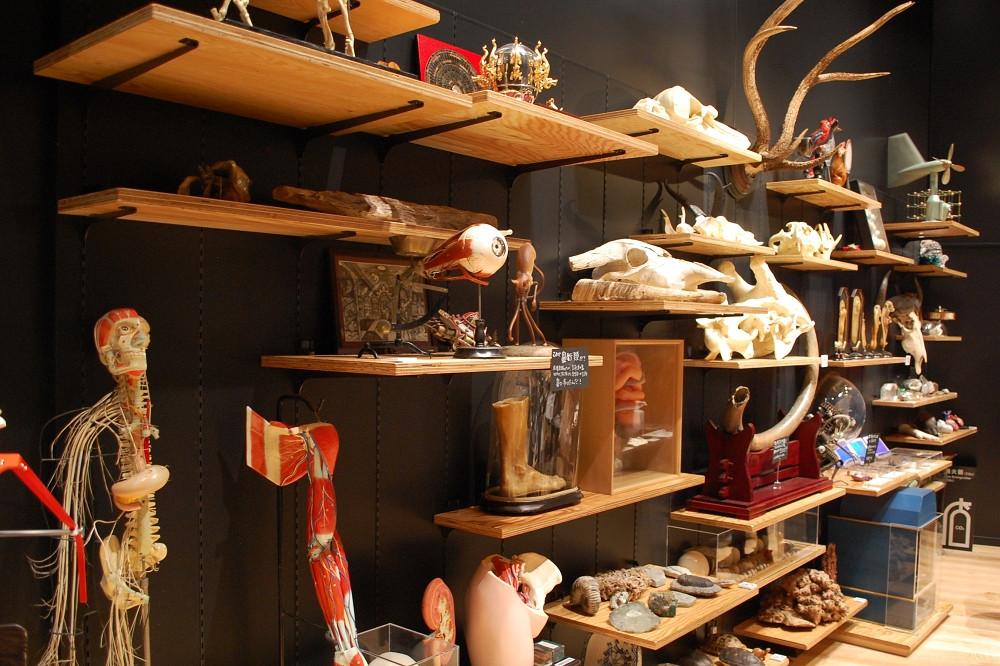 「荒俣ワンダー秘宝館」では、普通の博物館では見かけない珍品、奇品がずらりと並べられている
