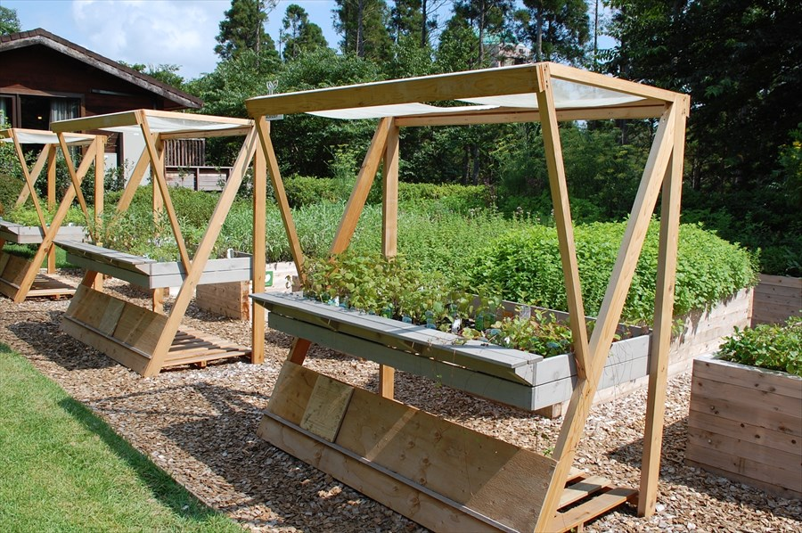 ハーブナーセリーではさまざまなハーブが栽培されている