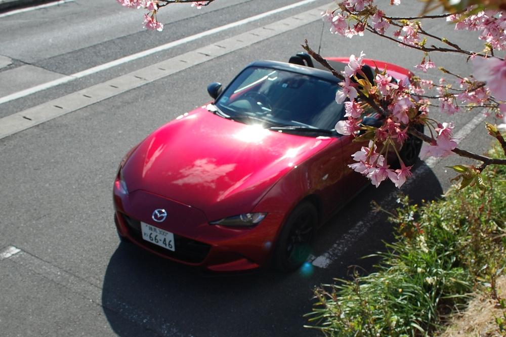 暖かな日差しのもと、河津桜を頭上に眺めながらのんびりとした時間を過ごす。オープンカーならではの贅沢