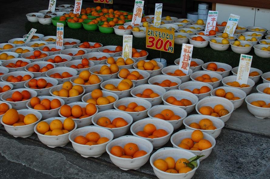 女将さんの話によれば、湯河原は年間を通して様々な柑橘類が収穫できる希有な土地なのだそう