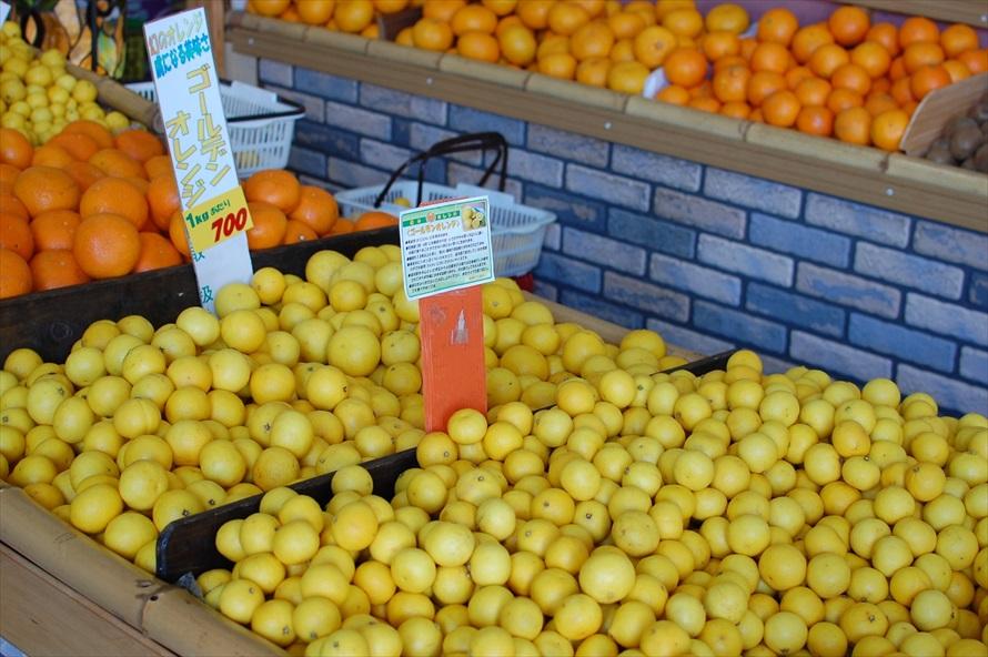 「黄金柑」とも呼ばれるゴールデンオレンジ。小ぶりで、皮は簡単に手でむけるため、いくらでも食べられる