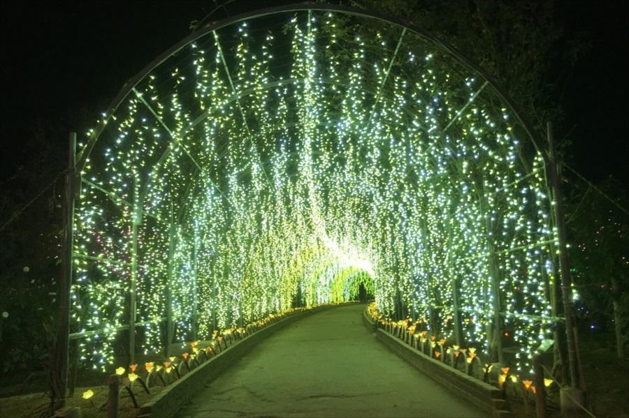 光あふれる「きばな藤のトンネル」