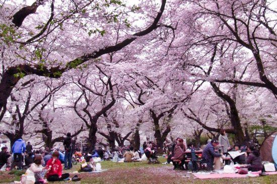 都内有数のお花見スポットとして有名。2月には「梅園」で「うめ祭り」が催される(2018年撮影)