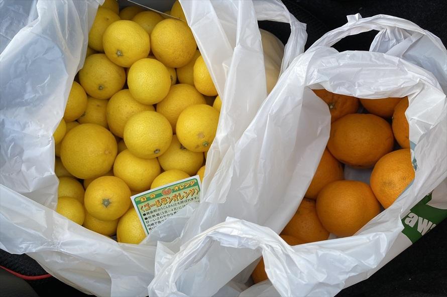 ゴールデンオレンジが店頭に並ぶのは3月から4月までとのこと。酸味が強いように見えるが、甘くてグレープフルーツに近い風味がある