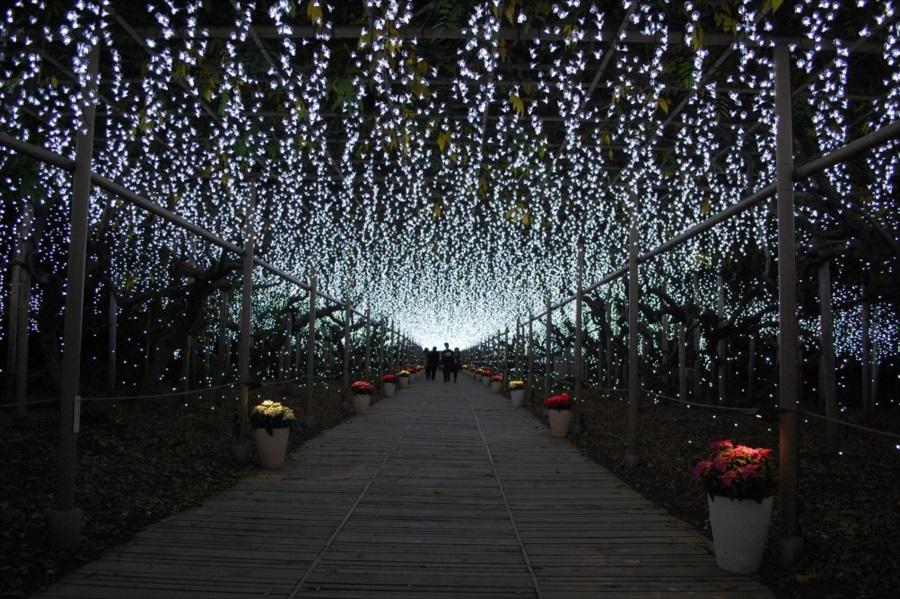 幻想的な雰囲気が広がる「白藤のトンネル」
