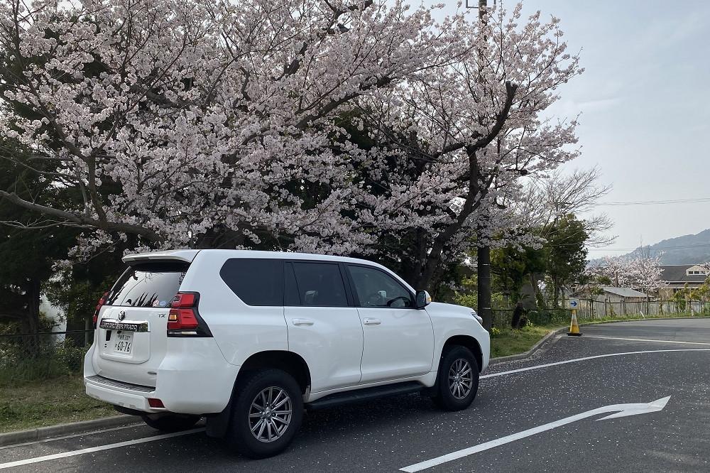 小学校らしく、敷地内には桜が咲き誇っていた