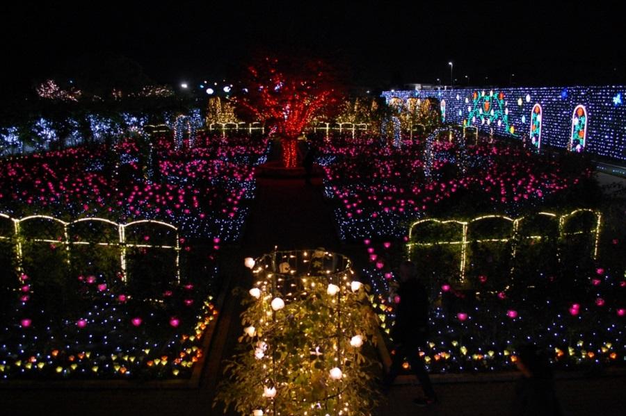 「光のバラ園」は高い位置から撮影すると美しく撮れる