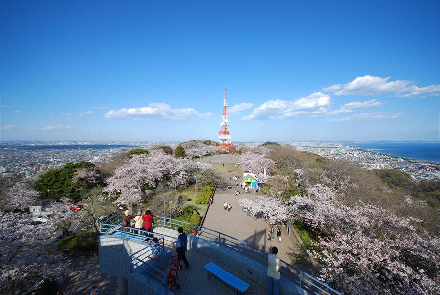 新展望台から望む高麗山公園の桜と平塚の街並み。相模湾や江の島も見渡せる
