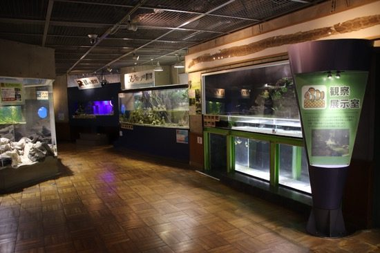 「観察・展示室」には、「マングローブの世界」「磯の世界」「ジャングルの世界」など、地域ごとの環境が再現されていて、それぞれの生き物を観察することができる