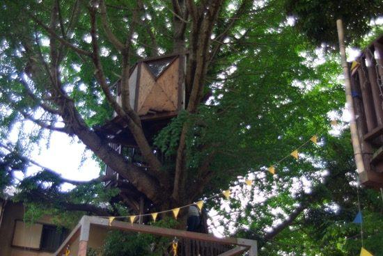 イチョウの木のツリーハウス「アルボ」