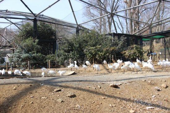 ウォークインバード・ケージは檻の中で鳥たちを見ることができる