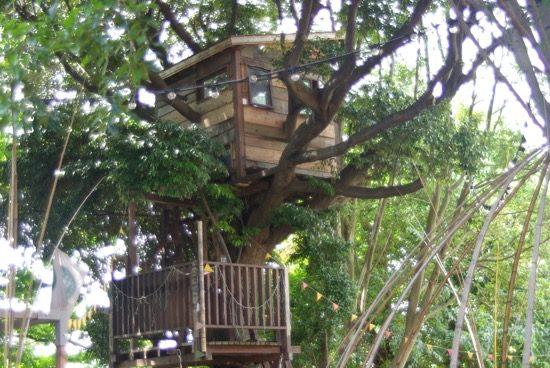 カシの木のツリーハウス「ロンガ」